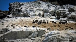 Sur l'océan Pacifique dans la réserve de Pingouin de Humboldt