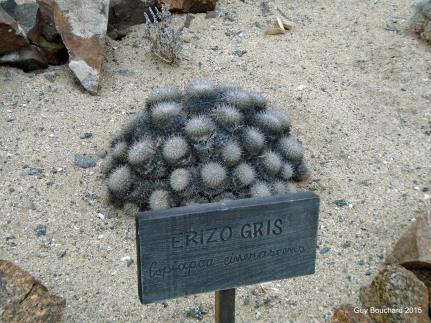 Cactus unique dans le Parc Pan de Azucar