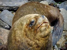 De belles bêtes près du port de Caldera