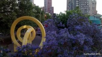 Arbres en fleur à Santiago
